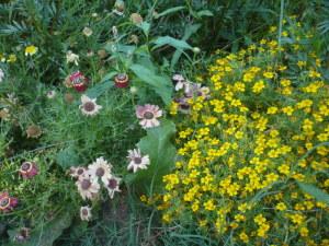 色とりどりの可憐な花