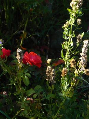 赤い花と白くて背の高い花